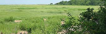 View of YCT's 34 acres of salt marsh seen from High Hill Farm Conservation Restriction